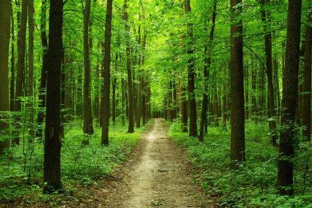 Лес vs стресс: японская практика лесных ванн
